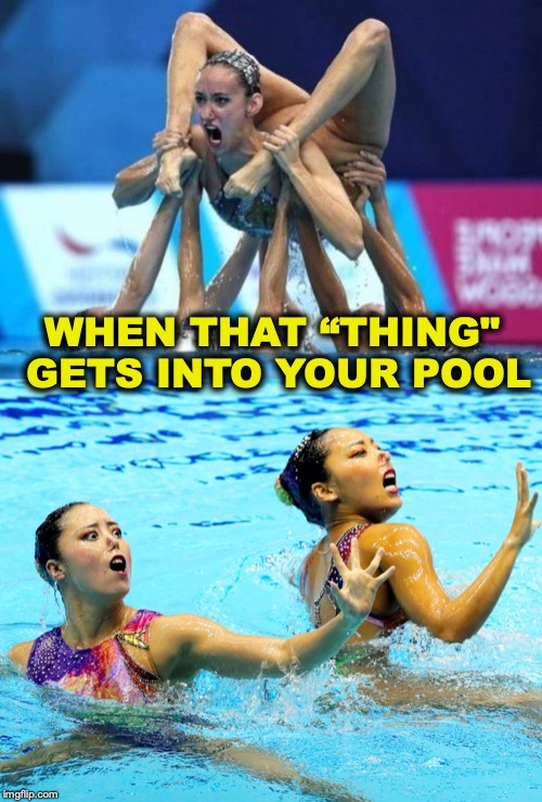 "WHEN THAT ""THING"" GETS INTO YOUR POOL 