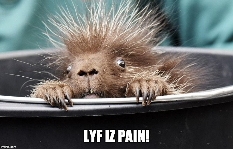 edgy porcupine | LYF IZ PAIN! | image tagged in edgy porcupine | made w/ Imgflip meme maker