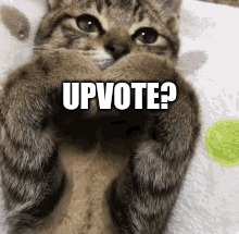 Please? | UPVOTE? | image tagged in cats,cute cat,upvote | made w/ Imgflip meme maker
