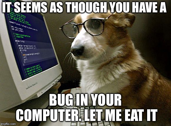 Why do dogs eat bugs? | IT SEEMS AS THOUGH YOU HAVE A BUG IN YOUR COMPUTER. LET ME EAT IT | image tagged in corgi hacker,dog eat bug | made w/ Imgflip meme maker