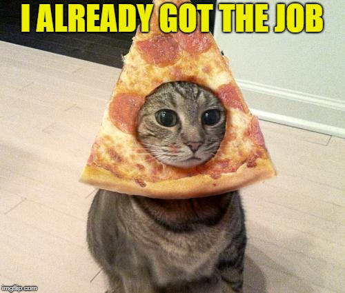 pizza cat | I ALREADY GOT THE JOB | image tagged in pizza cat | made w/ Imgflip meme maker