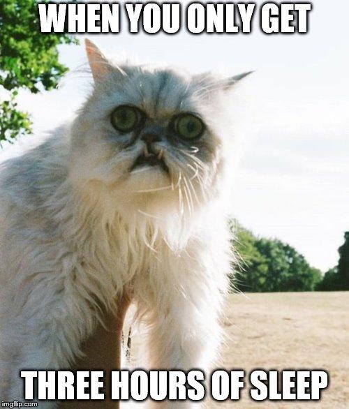 Sleep-Deprived Cat - Imgflip