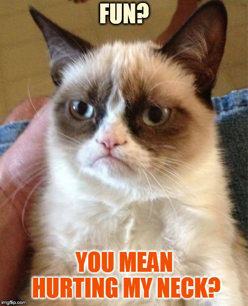 Grumpy Cat Meme | FUN? YOU MEAN HURTING MY NECK? | image tagged in memes,grumpy cat | made w/ Imgflip meme maker