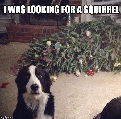 Christmas Tree hating dog is busted | I WAS LOOKING FOR A SQUIRREL | image tagged in dog christmas tree,busted,merry christmas | made w/ Imgflip meme maker