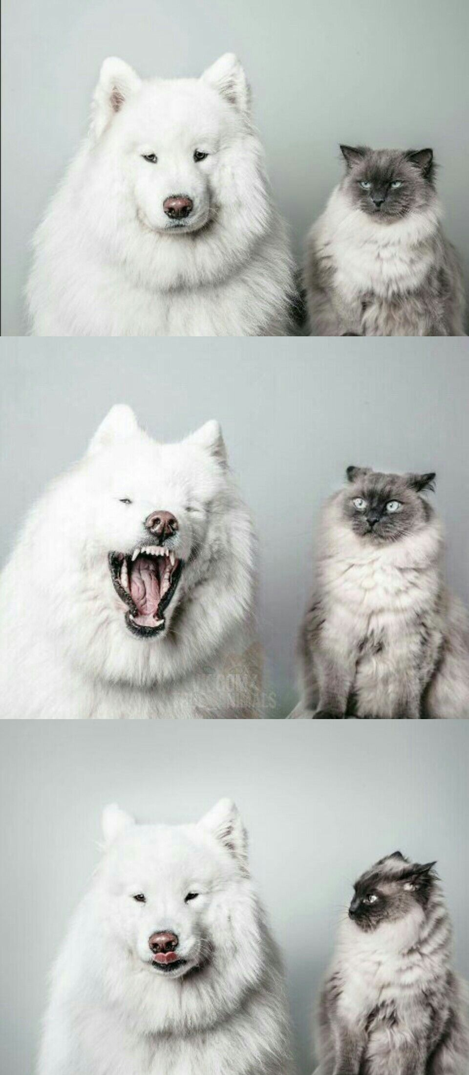 High Quality bad joke dog cat Blank Meme Template