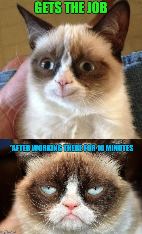 GETS THE JOB *AFTER WORKING THERE FOR 10 MINUTES | image tagged in memes,grumpy cat not amused | made w/ Imgflip meme maker