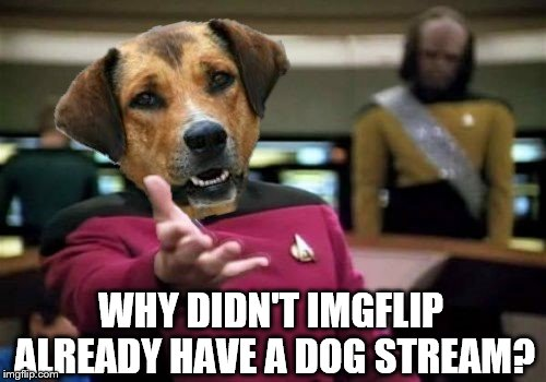 WHY DIDN'T IMGFLIP ALREADY HAVE A DOG STREAM? | made w/ Imgflip meme maker