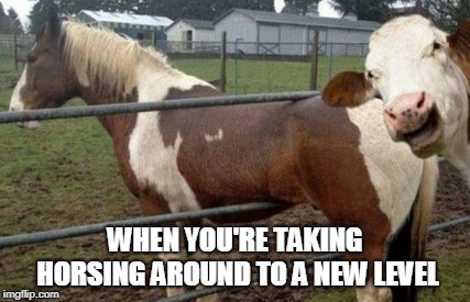 Horsing Around | WHEN YOU'RE TAKING HORSING AROUND TO A NEW LEVEL | image tagged in just horsing around,meme,cow,evil cows | made w/ Imgflip meme maker