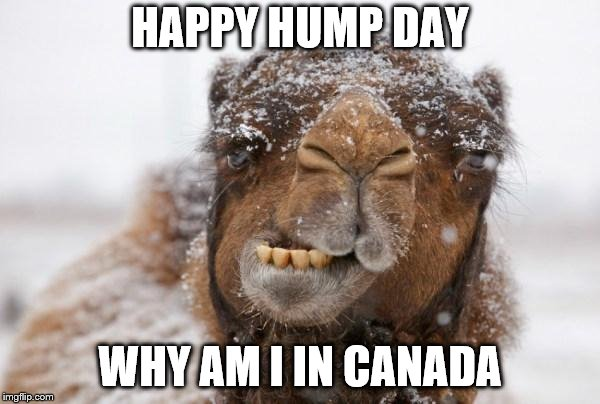 Freezing Hump Day Camel | HAPPY HUMP DAY WHY AM I IN CANADA | image tagged in freezing hump day camel,canada,meme,memes,funny animal meme | made w/ Imgflip meme maker