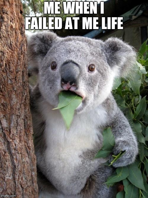 Surprised Koala Meme | ME WHEN I FAILED AT ME LIFE | image tagged in memes,surprised koala | made w/ Imgflip meme maker