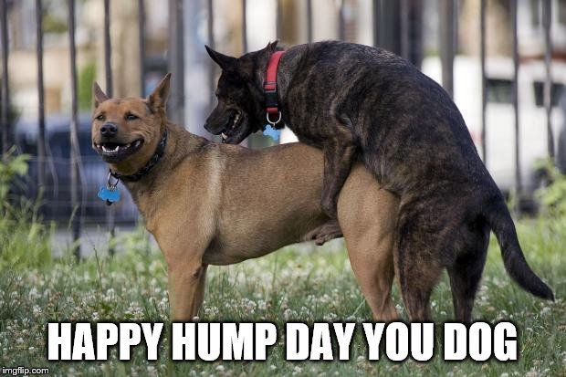 happy hump day | HAPPY HUMP DAY YOU DOG | image tagged in dogs humping,happy hump day,dog memes,new memes,goofy memes | made w/ Imgflip meme maker
