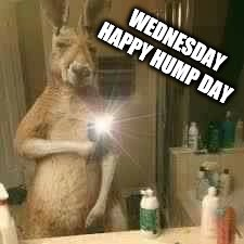 happy hump day | WEDNESDAY HAPPY HUMP DAY | image tagged in selfie wednesday,happy hump day,hump day camel,new meme,animal memes | made w/ Imgflip meme maker