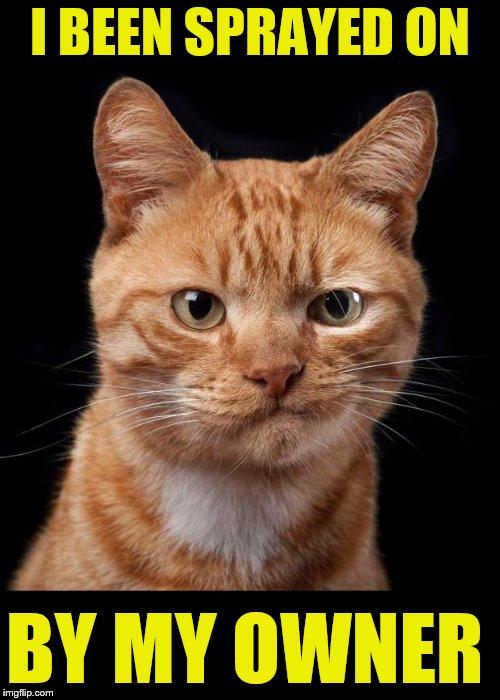 Cats Funny Cat Memes Memes Gifs Imgflip