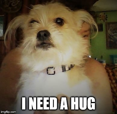I need a hug | I NEED A HUG | image tagged in shelbe,dog,dog memes,new meme,meme,memes | made w/ Imgflip meme maker