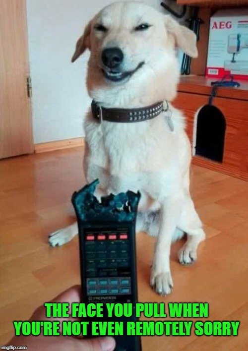 I'm not remotely sorry |  THE FACE YOU PULL WHEN YOU'RE NOT EVEN REMOTELY SORRY | image tagged in meme,bad pun dog,dog memes,bad dog,funny | made w/ Imgflip meme maker