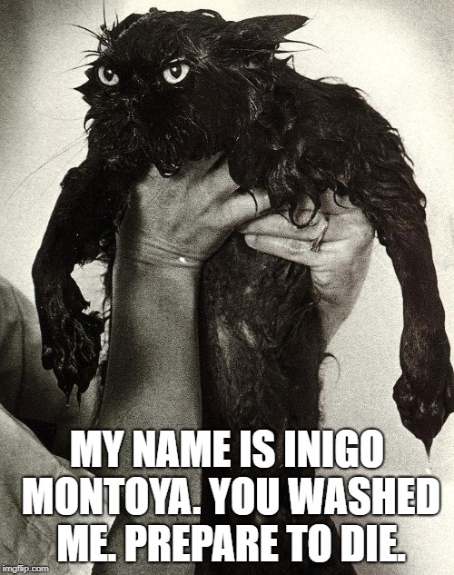 Prepare to die. | MY NAME IS INIGO MONTOYA. YOU WASHED ME. PREPARE TO DIE. | image tagged in angry wet cat,wet cat,funny memes,princess bride,prepare to die,meme | made w/ Imgflip meme maker