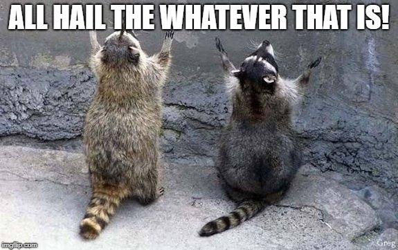 Raccoon Worshipping | ALL HAIL THE WHATEVER THAT IS! | image tagged in raccoon worshipping | made w/ Imgflip meme maker