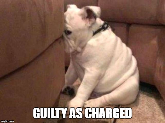 Guilty dog | GUILTY AS CHARGED | image tagged in guilty dog | made w/ Imgflip meme maker