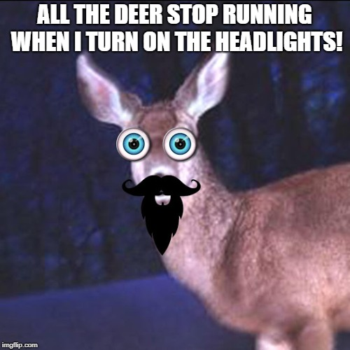 deer in the headlights | ALL THE DEER STOP RUNNING WHEN I TURN ON THE HEADLIGHTS! | image tagged in deer in the headlights | made w/ Imgflip meme maker