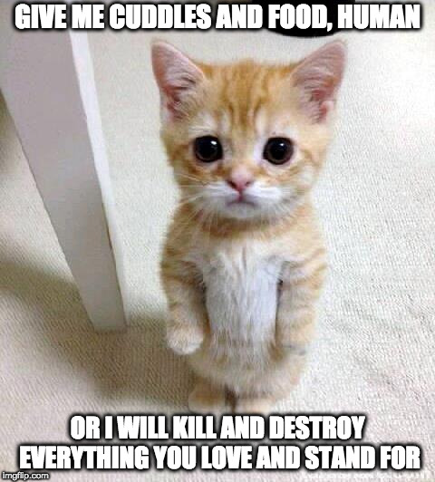 Everything you stand for | GIVE ME CUDDLES AND FOOD, HUMAN OR I WILL KILL AND DESTROY EVERYTHING YOU LOVE AND STAND FOR | image tagged in memes,cute cat,inappropriate,not fitting,kitten | made w/ Imgflip meme maker
