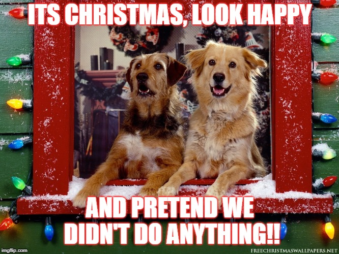 Christmas dogs | ITS CHRISTMAS, LOOK HAPPY AND PRETEND WE DIDN'T DO ANYTHING!! | image tagged in dogs,christmas | made w/ Imgflip meme maker