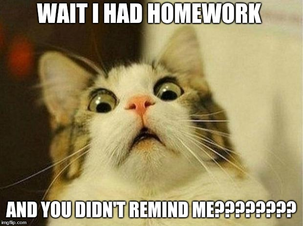 Scared Cat Meme | WAIT I HAD HOMEWORK AND YOU DIDN'T REMIND ME???????? | image tagged in memes,scared cat | made w/ Imgflip meme maker