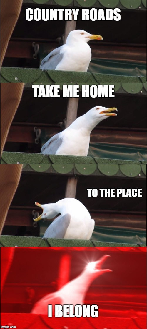 Inhaling Seagull |  COUNTRY ROADS; TAKE ME HOME; TO THE PLACE; I BELONG | image tagged in memes,inhaling seagull | made w/ Imgflip meme maker