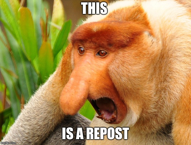 Janusz monkey screaming | THIS IS A REPOST | image tagged in janusz monkey screaming | made w/ Imgflip meme maker