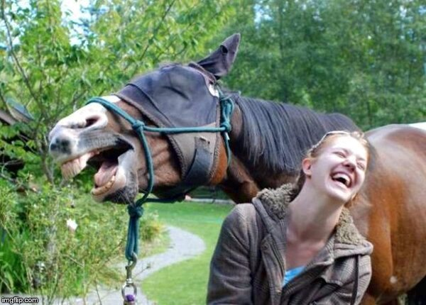 Laughing Horse | image tagged in laughing horse | made w/ Imgflip meme maker
