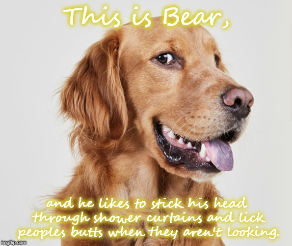 Watch your back! | This is Bear, and he likes to stick his head through shower curtains and lick peoples butts when they aren't looking. | image tagged in dog,funny,shower,licking | made w/ Imgflip meme maker