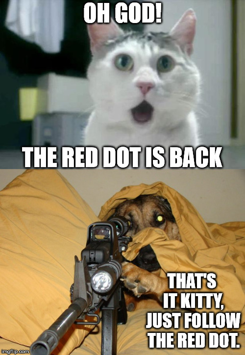 OH GOD! THAT'S IT KITTY, JUST FOLLOW THE RED DOT. THE RED DOT IS BACK | image tagged in memes,omg cat | made w/ Imgflip meme maker
