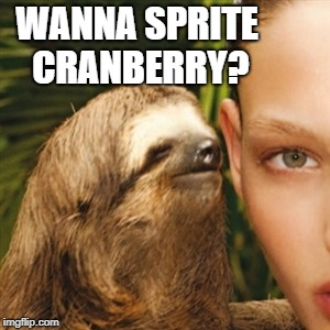 it's the most thirstiest time of the year | WANNA SPRITE CRANBERRY? | image tagged in memes,whisper sloth | made w/ Imgflip meme maker