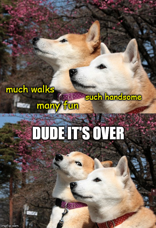 Shibas late for the party | such handsome many fun much walks DUDE IT'S OVER | image tagged in bad pun dogs,doge,dead meme,shiba inu,shibe | made w/ Imgflip meme maker