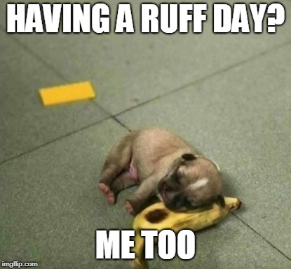 HAVING A BAD DAY | HAVING A RUFF DAY? ME TOO | image tagged in puppy,cute puppy,bad day,banana | made w/ Imgflip meme maker