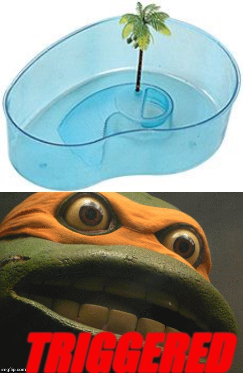Turtle Bowl Trigger | TRIGGERED | image tagged in triggered,turtle,reptile,memes,animals | made w/ Imgflip meme maker