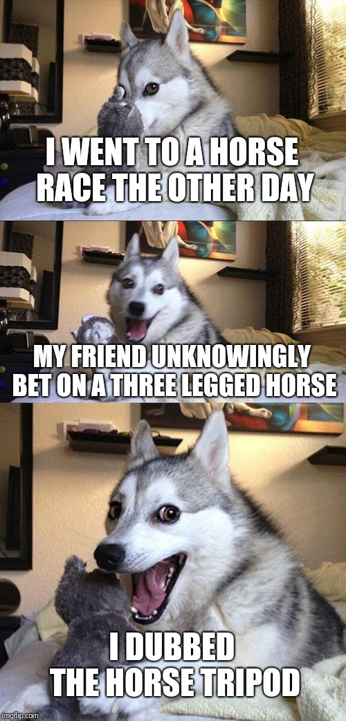 BEHOLD!!TRIPOD THE THREE LEGGED HORSE!! |  I WENT TO A HORSE RACE THE OTHER DAY; MY FRIEND UNKNOWINGLY BET ON A THREE LEGGED HORSE; I DUBBED THE HORSE TRIPOD | image tagged in memes,bad pun dog,horse,disabled,bet,horse racing | made w/ Imgflip meme maker