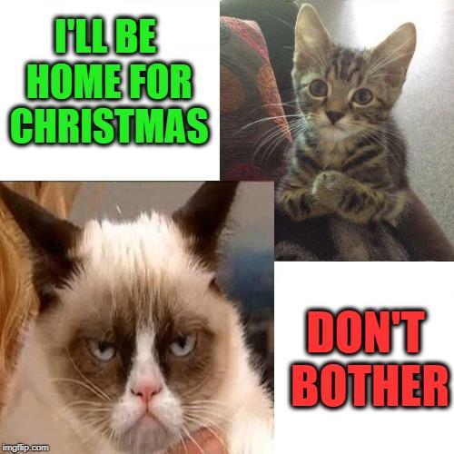 Christmas Memes Cats.Cats Christmas Memes Gifs Imgflip