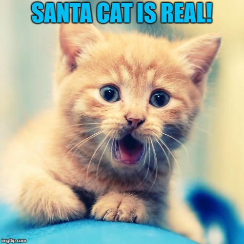 SANTA CAT IS REAL! | made w/ Imgflip meme maker