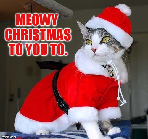 MEOWY CHRISTMAS TO YOU TO. | made w/ Imgflip meme maker