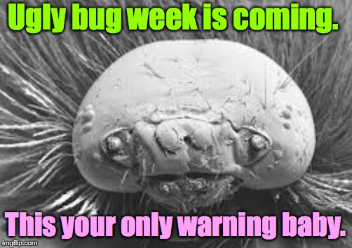 Ugly bug week is coming.  Dec 22-28.  A Heavencanwait event ( : | Ugly bug week is coming. This your only warning baby. | image tagged in memes,ugly bug week,heavencanwait,bugs,insects,creepy crawlies | made w/ Imgflip meme maker