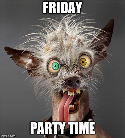 Friday party time | FRIDAY PARTY TIME | image tagged in me monday morning,friday,party time,meme,memes,funny animals | made w/ Imgflip meme maker