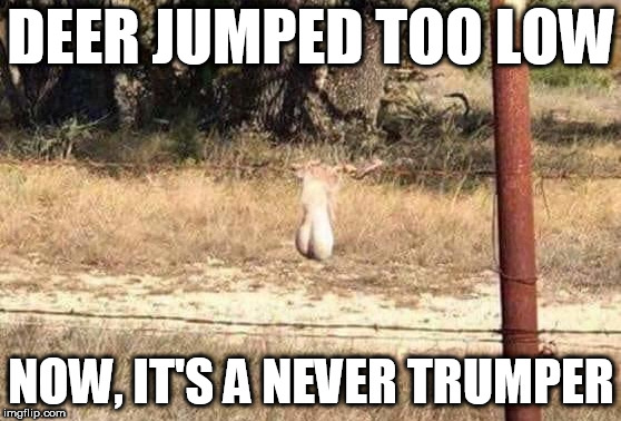 never trumper deer | DEER JUMPED TOO LOW NOW, IT'S A NEVER TRUMPER | image tagged in rinos,never trumpers,globalists,drain the swamp,paul ryan rino | made w/ Imgflip meme maker