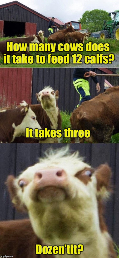 Bad pun cow  | How many cows does it take to feed 12 calfs? Dozen'tit? It takes three | image tagged in bad pun cow | made w/ Imgflip meme maker