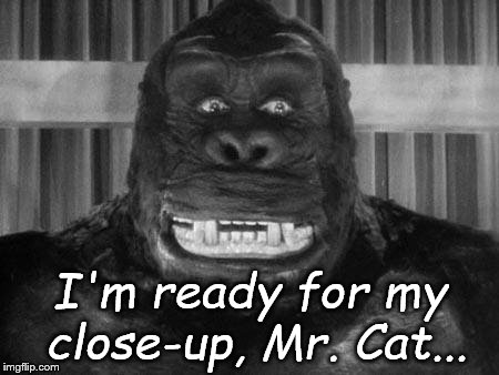 King kong | I'm ready for my close-up, Mr. Cat... | image tagged in king kong | made w/ Imgflip meme maker