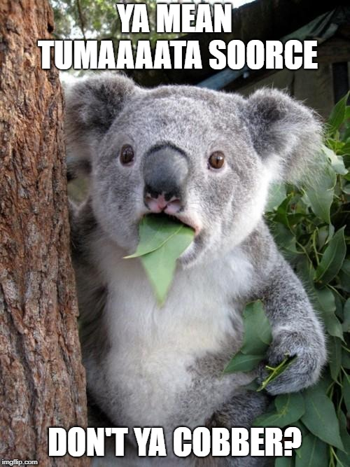 Surprised Koala Meme | YA MEAN TUMAAAATA SOORCE DON'T YA COBBER? | image tagged in memes,surprised koala | made w/ Imgflip meme maker