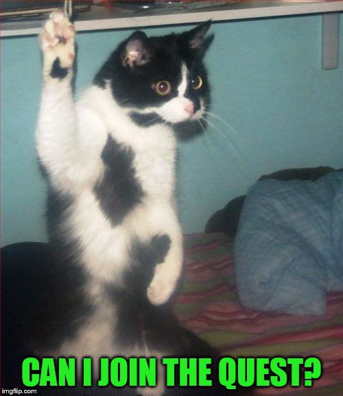 question cat | CAN I JOIN THE QUEST? | image tagged in question cat | made w/ Imgflip meme maker