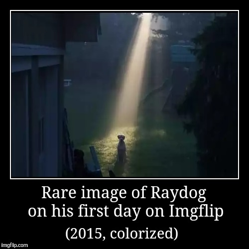 Rare image of Raydog on his first day on Imgflip | (2015, colorized) | image tagged in funny,demotivationals,dogs,raydog,imgflip | made w/ Imgflip demotivational maker