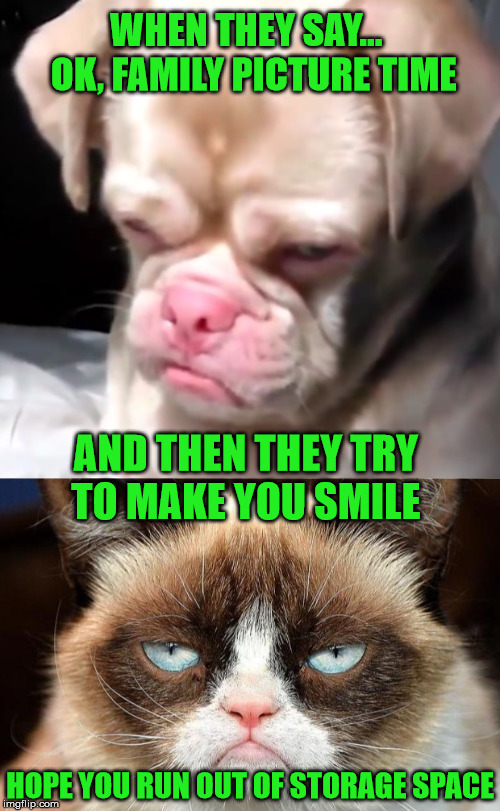 Grumpy Cat and Grumpy Dog says this is all you're getting... |  WHEN THEY SAY...  OK, FAMILY PICTURE TIME; AND THEN THEY TRY    TO MAKE YOU SMILE; HOPE YOU RUN OUT OF STORAGE SPACE | image tagged in memes,grumpy dog,family photo,grumpy cat | made w/ Imgflip meme maker