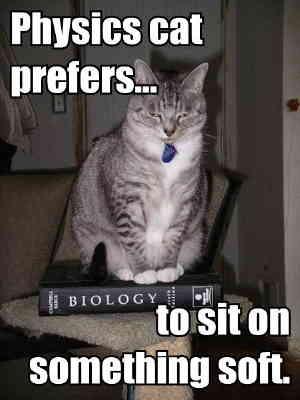 Physics cat
