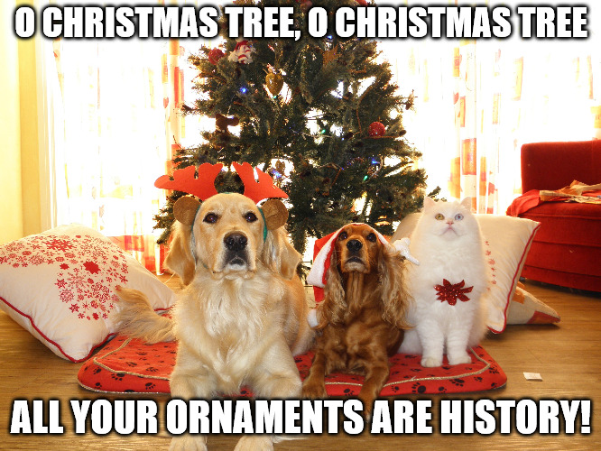 Uh Oh! The Christmas Tree Triple Threat! | O CHRISTMAS TREE, O CHRISTMAS TREE ALL YOUR ORNAMENTS ARE HISTORY! | image tagged in christmas,dog christmas tree,cat,christmas tree,ornaments,ayy lmao | made w/ Imgflip meme maker
